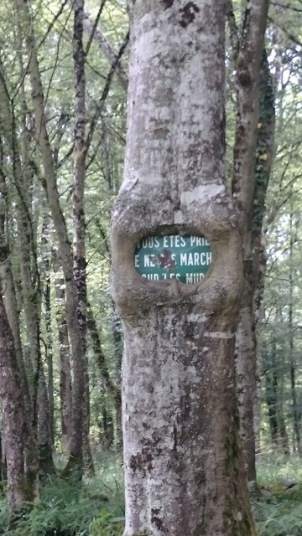compierre - tree sign