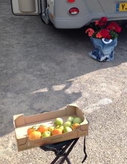 wissant-harvest