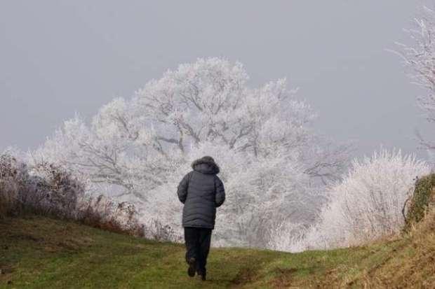 telephoto-tree