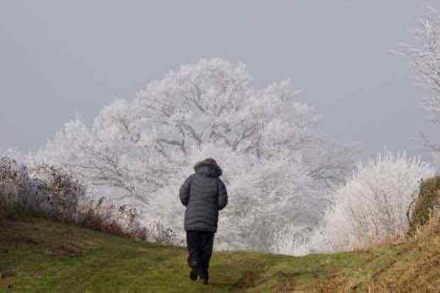 Treefrost small