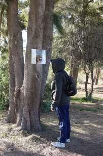 Poot pedras tree